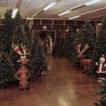 Christmas Tree Area