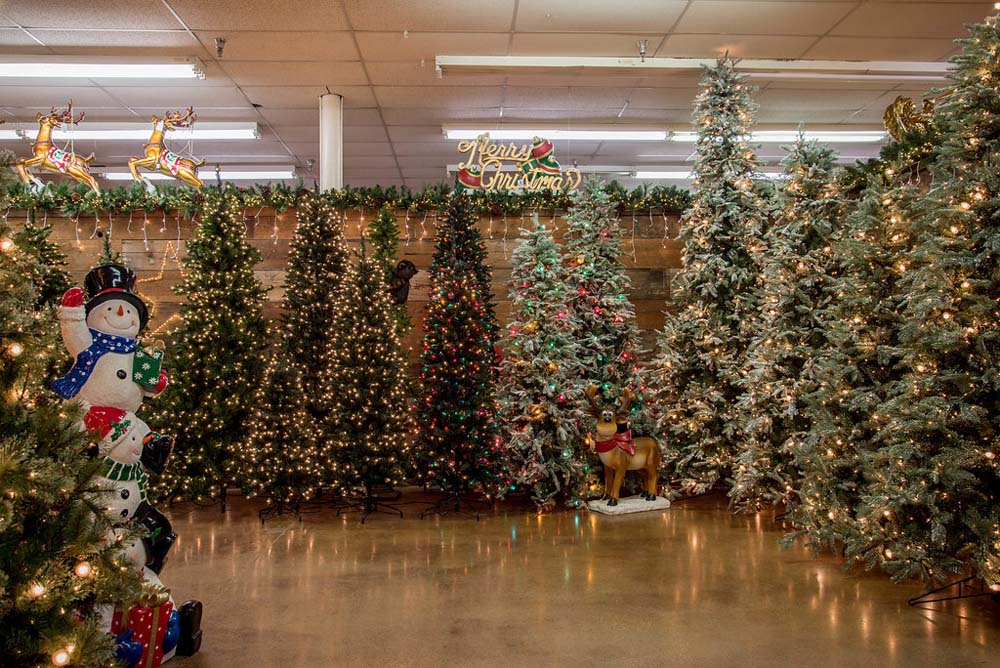 28 Best How Do Christmas Trees Last Last Minute